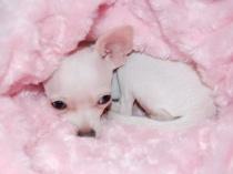 pink bimba